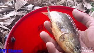 Đi câu lươn, gặp sư phụ câu cá rô đồng cực chất( eel fishing)