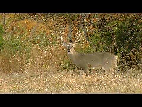 Opening Weekend Of Deer Season In Goldthwaite - Texas Parks & WIldlife [Official]