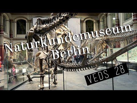 Berlin Natural History Museum | daneesaur #VEDS 28