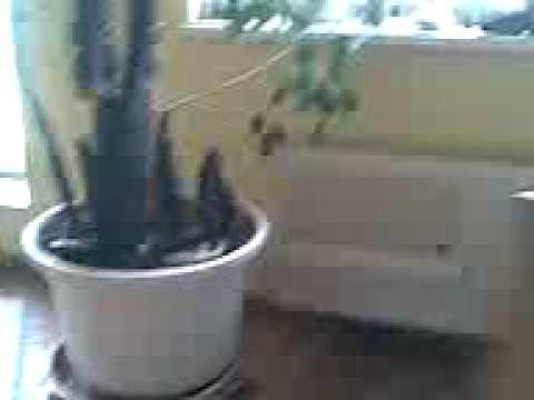 wasser von der decke youtube. Black Bedroom Furniture Sets. Home Design Ideas