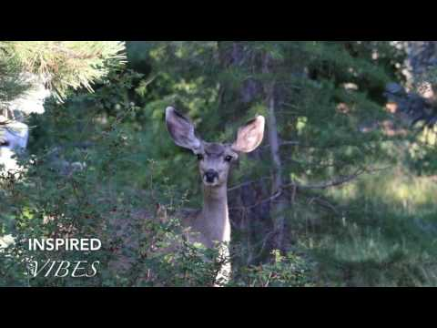 I'll Never Know By Dj Quads (Vlog Music)