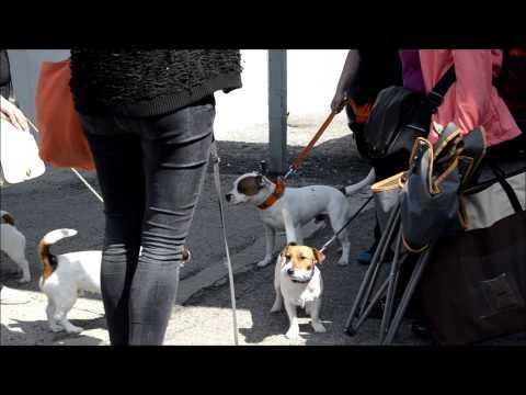 Prague Expo Dog 2015