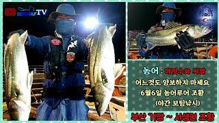 6월6일 야간 농어-루어낚시/ 조황 (부산 기장권~나사…
