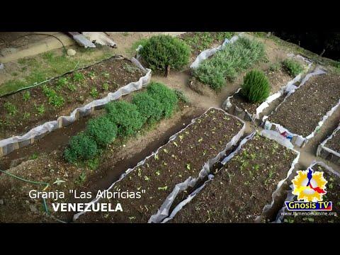 03- La Conquista del Campo - Documental GNOSISTV
