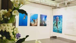 Андрей Сухинин Выставка Мой Экватор