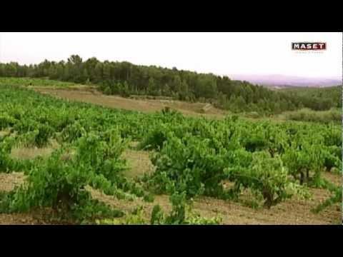 Vino tinto Cabernet Franc 2013 de Bodegas Maset del Lleó