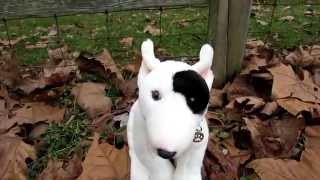 Reviewing The Signature Bull Terrier
