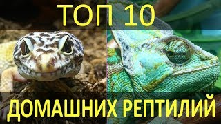 ТОП-10 РЕПТИЛИЙ ДЛЯ ДОМА! Какие рептилии лучше всего подойдут для домашнего содержания!