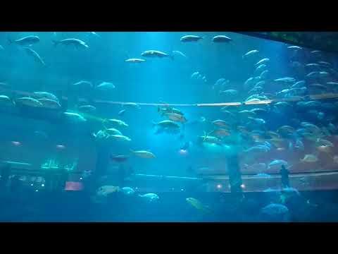 Dubai Aquarium & Underwater Zoo Jan 18, 2018  Part 1