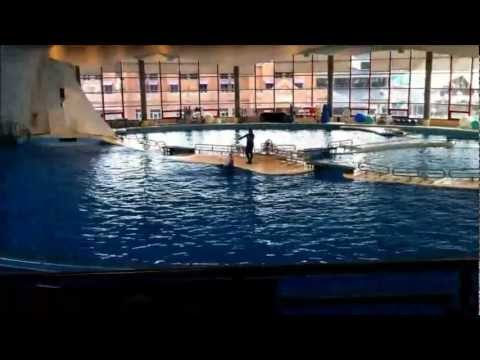 The National Aquarium of Baltimore (Dolphin Discovery)