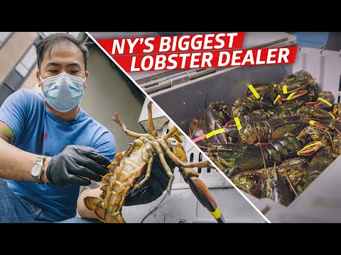 How Steven Wong Moves 80,000 Pounds of Lobster a Week — Vendors