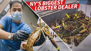 How Steven Wong Moves 80,000 Pounds of Lobster a Week - Vendors