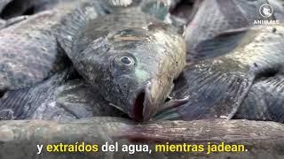 Este video cambiará tu opinión sobre la pesca