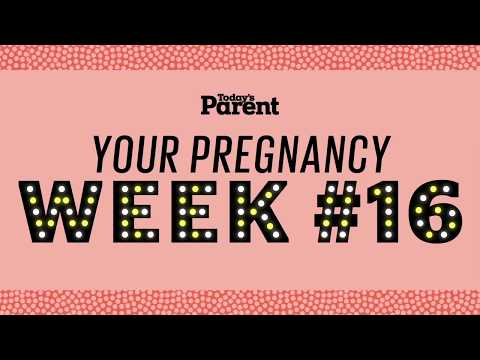 Your pregnancy: 16 weeks