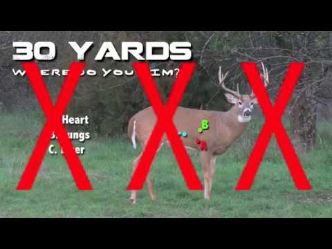 Duckin Deers - Where to Aim on Big Whitetail Deer