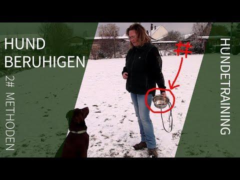 Hund beruhigen ► 2 effektive Methoden zur Hund Beruhigung ► Hund beruhigen