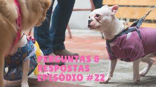 PERGUNTAS & RESPOSTAS #22 | Comportamento Canino