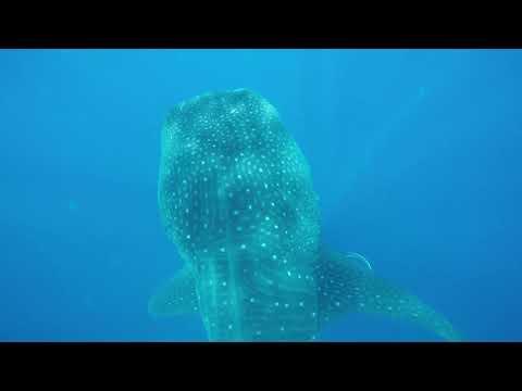 Gran Bahia Principe Tulum 2017 - Whale Shark Daddy Excursions