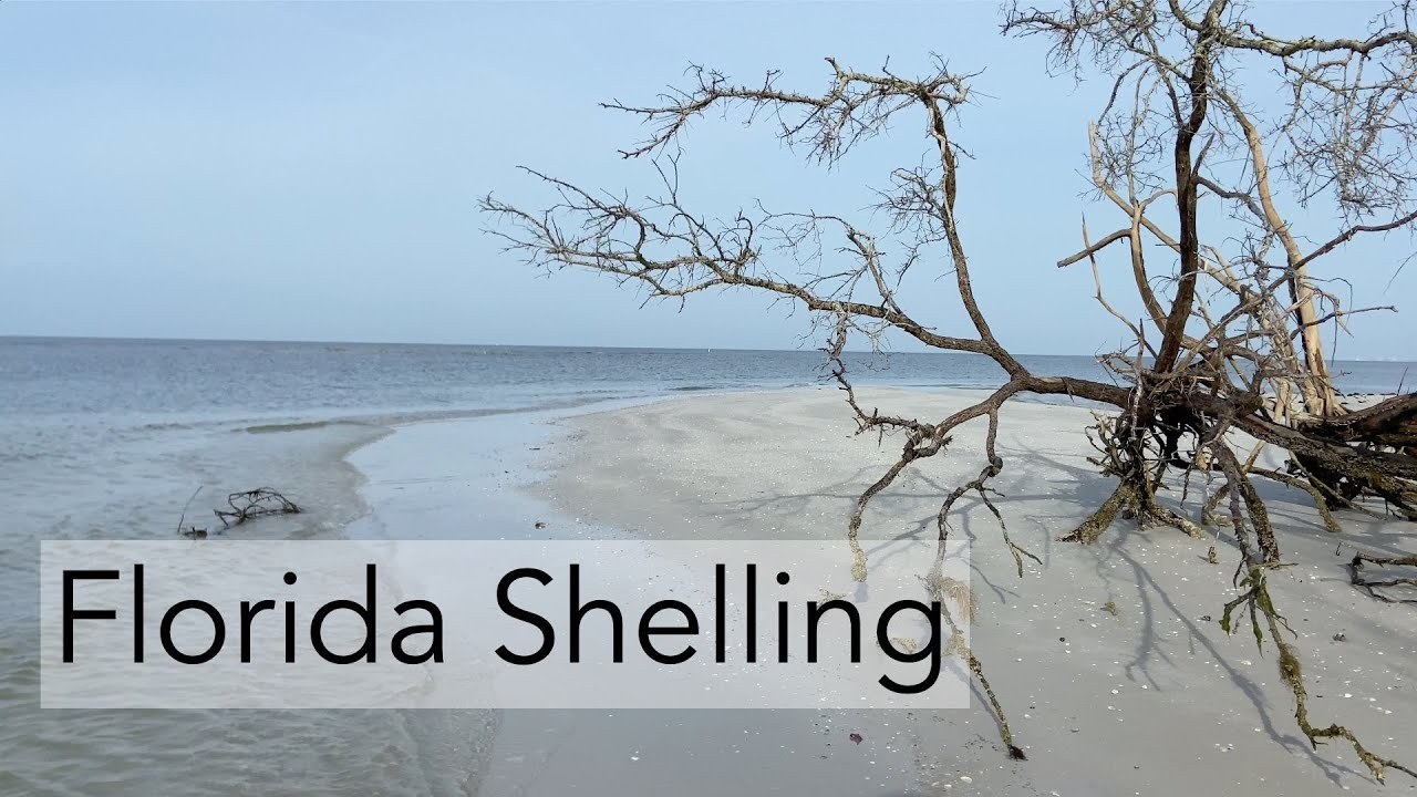 Finding Seashells in Florida. Let's go on a low tide walk and see what we find!