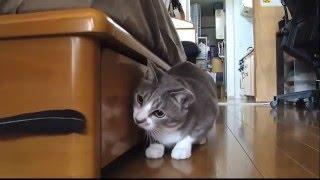 Смешное видео про кошек - Супер видео приколы! Забавные кошки (выпуск 7)