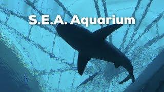 S.E.A Aquarium in Singapore