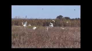 ibis at bear island sc 1