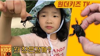 사슴벌레 구출작전! 곤충박사와 사슴벌레 곤충학습 곤충놀이 insect learning l insect hunter