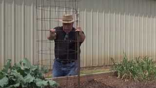 Planting and Caging Cucumber  - May 2015
