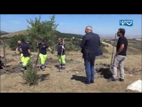"""Servizio La Nuova Tg """"Un albero per la vita Tricar..."""