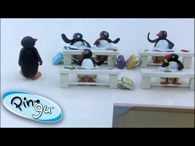 Pingu And Friends At School! @Pingu - Official Channel   | 1 Hour | Cartoons for Kids