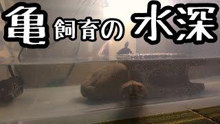 亀飼育の水深について。自分なりの見解。 ① ニホンイシガメ クサガメ クランウェルツノガエル カブトニオイガメ サンドデグー ヒョウモントカゲモドキ などを飼育者しています ...