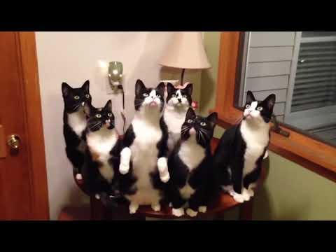 NINJA CATS in ACTION!