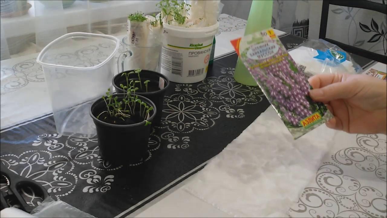 Новый  надёжный метод! Посев в пелёнки! Экономит место на подоконнике!