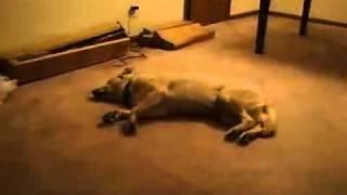 Собаке снится кошмар))))