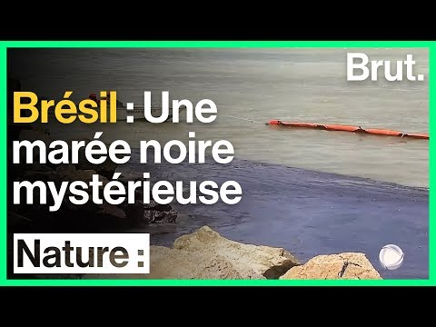 Brésil : des galettes de pétrole ont envahi une centaine de plages