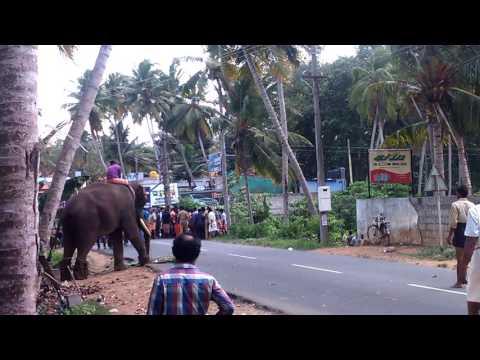 Elephant attack at parassala