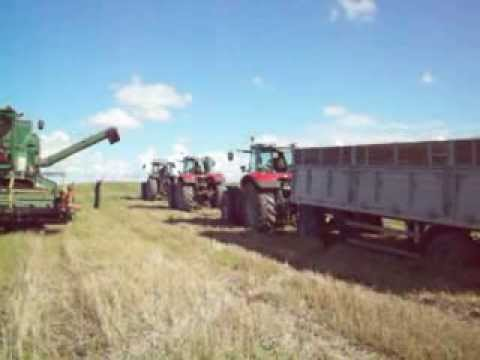 Massey ferguson 3690  6495  6490  pulling traler loaded with 25 ton winter wheat in lithuania