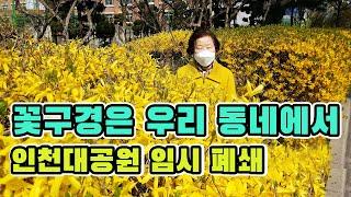 꽃구경은 우리 동네에서_인천대공원 임시 폐쇄