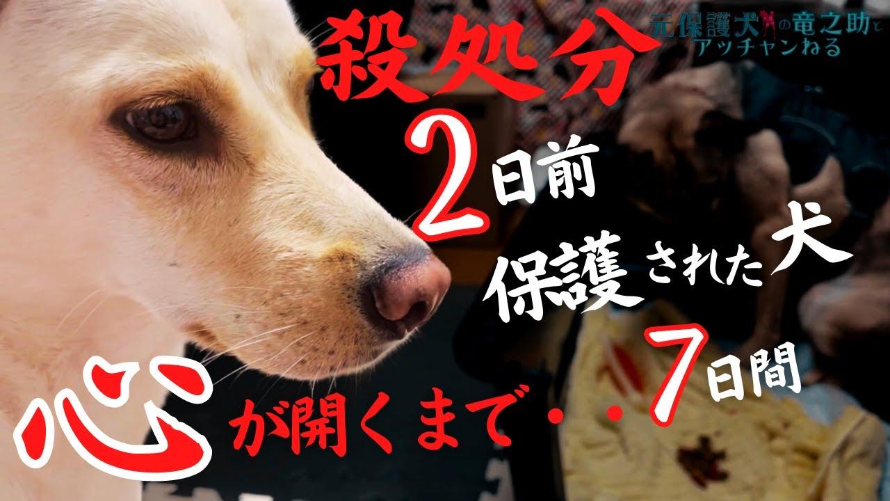殺処分される2日前に保護された犬アッチャンの心が開くまでの一週間トライアル・・生きると誓ったんだよ