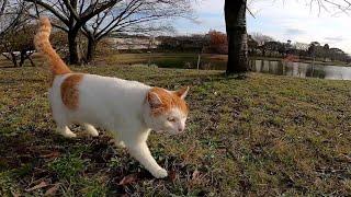 ナデナデが大好きな人懐っこい野良猫、ベンチに向かうと付いてきた