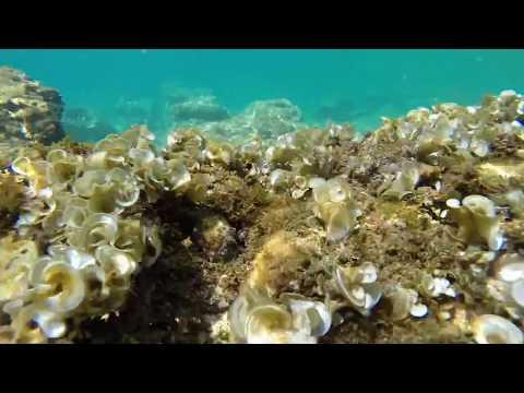 Murter (Slanica) underwater views, Croatia | GoPro