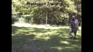 Protection Training.wmv