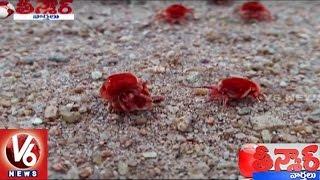 Arudra Worms Business in Nalgonda District   Teenmaar News   V6 News