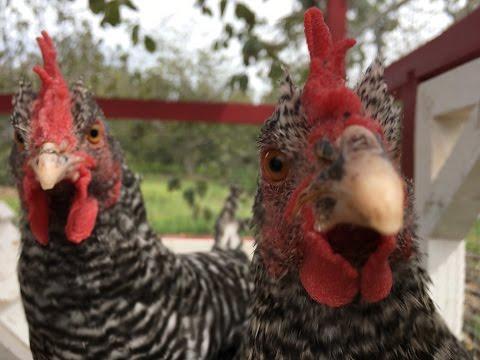 San Diego Farm Animal Rescue