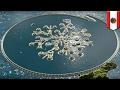 Seasteading: Floating libertarian city coming soon to French Polynesia - TomoNews