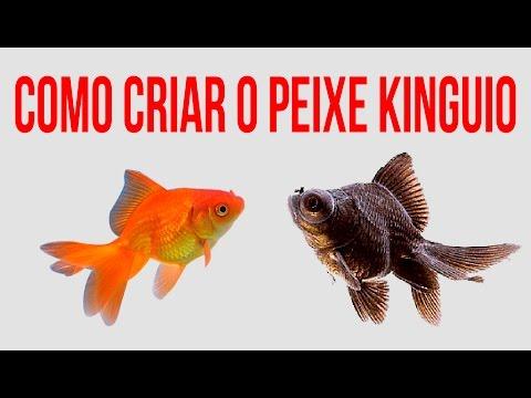 Kinguio oranda aquario do brasil doovi for Como criar peces koi