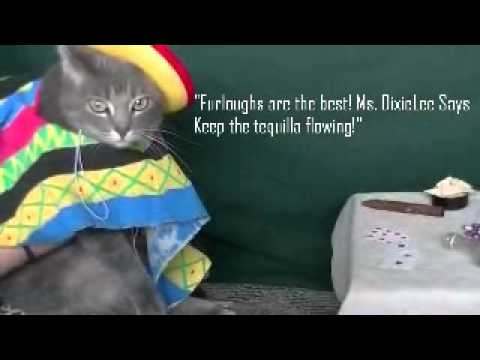 Happy Cinco de Mayo Holiday! - Funny Cats in Costume Video #3 - YouTube