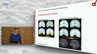 Guillen Fernandez - Long-Term Memory Formation and Stabilization in the Hippocampus and Beyond 1