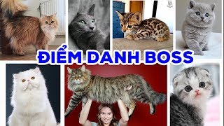 Điểm danh những Boss mà Sen có _ Tổng hơp các giống Mèo được yêu thích nhất