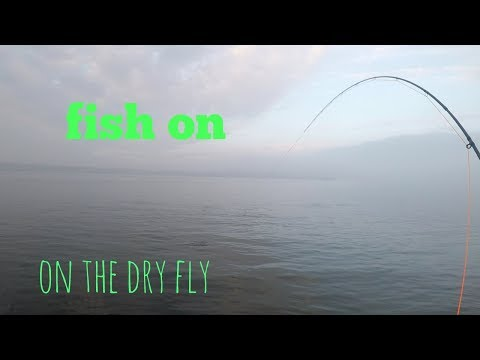 Fly Fishing For Sea Trout River Tay Estuary Tayport